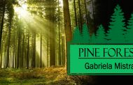 Pine Forest by Gabriela Mistral