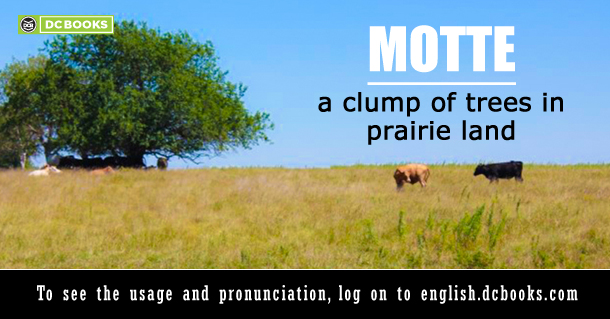 Word of the Day: Motte