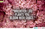 """Wherever life plants you, bloom with grace."""